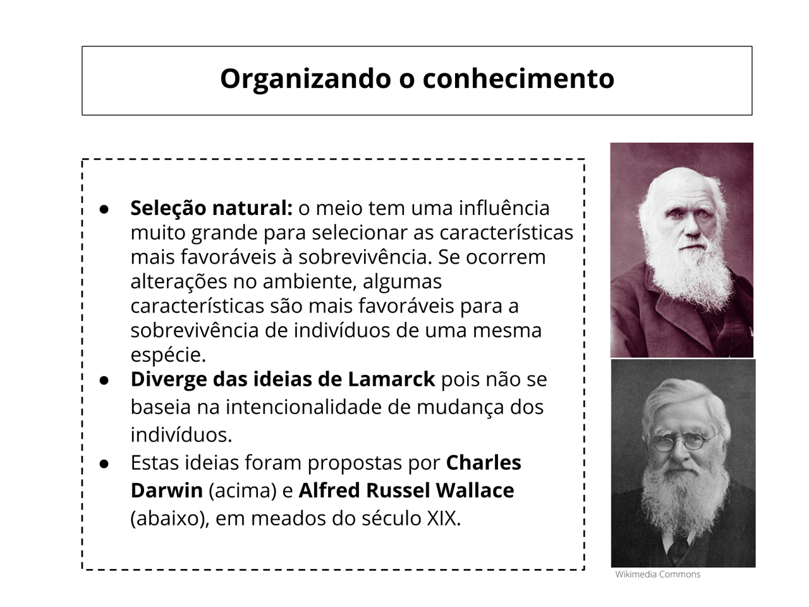 Ideias evolutivas: Darwin e Wallace