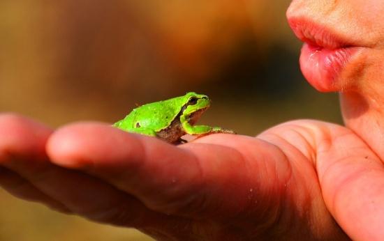 Boca de uma pessoa beijando um pequeno sapo que está na palma de sua mão