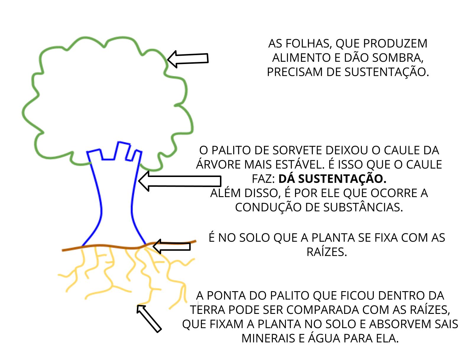 O caule e a raiz das plantas