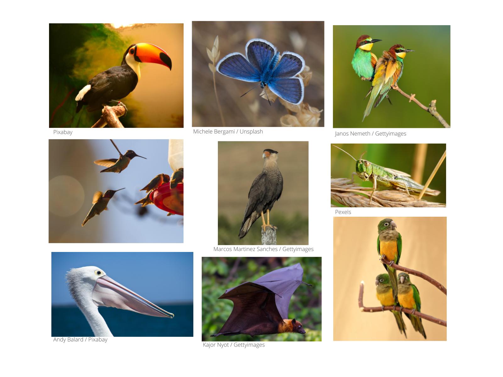 O Mundo Animal nas Alturas: Animais Voadores