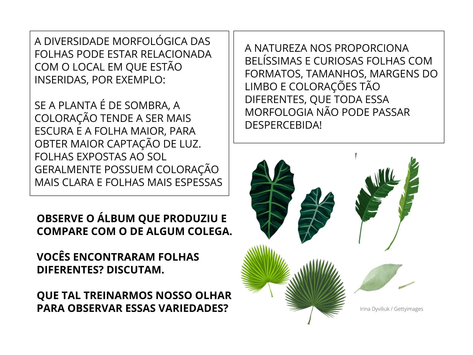 As diferenças entre as folhas