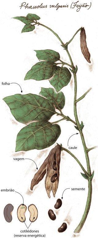 Explore ao máximo o estudo das plantas e oriente o desenho científico. Sandro Castelli
