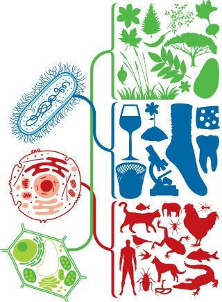 A classificação dos seres vivos fica mais clara quando se investiga a unidade que os constitui. Bruno Algarve