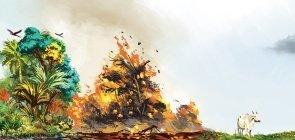 Infográfico: Amazônia em chamas