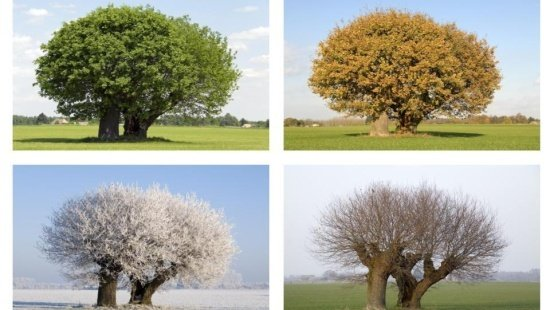 As estações do ano e os solstícios e equinócios