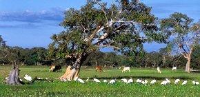 Pantanal e a diversidade da fauna e da flora: ponto de partida para comparação com outras formações vegetais. Foto: Marcelo Greco