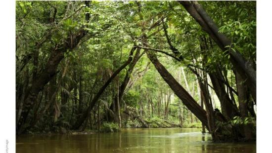 Floresta Amazônica: a relação entre o clima e a floresta