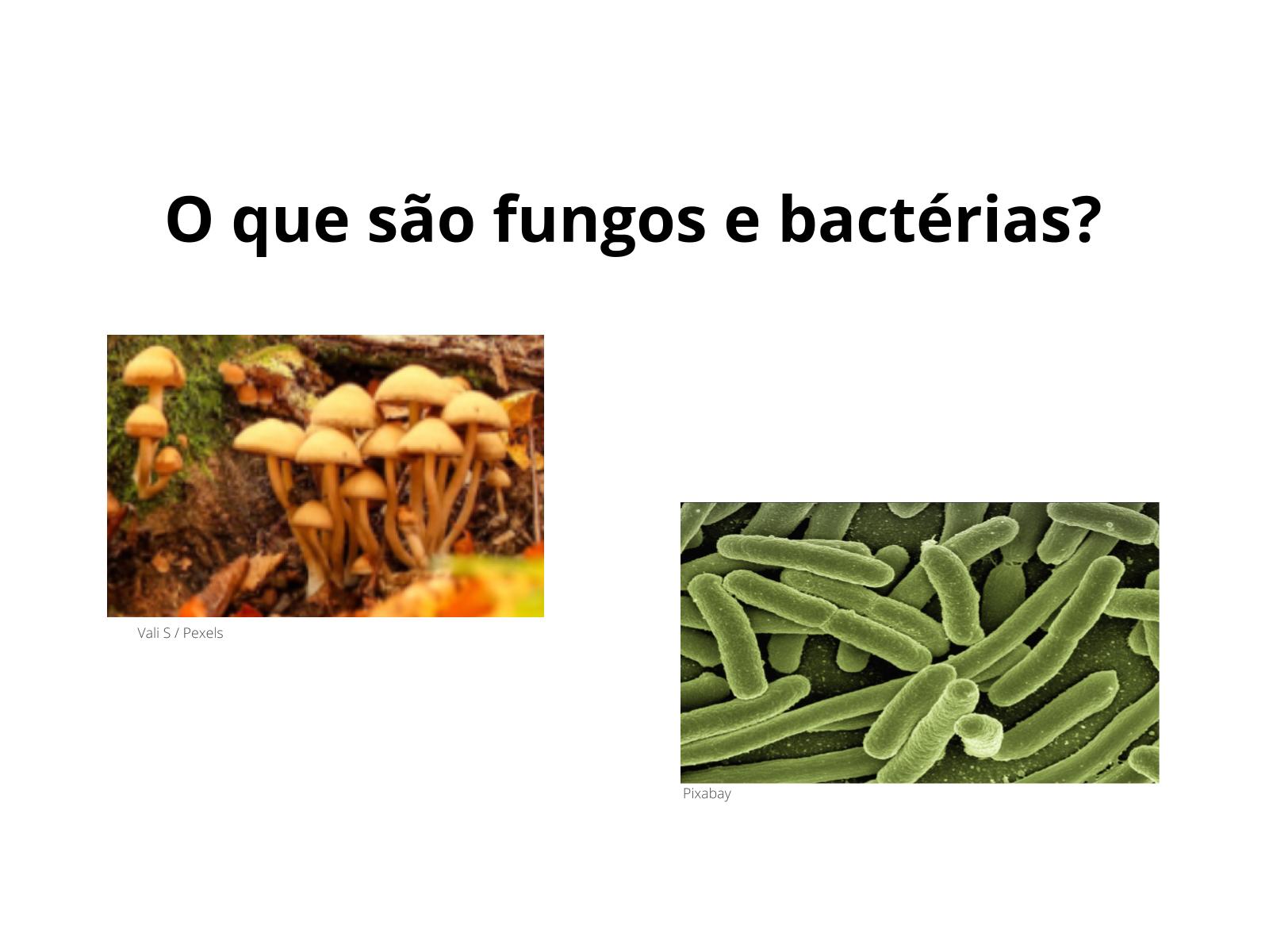 Conhecendo melhor os fungos e bactérias