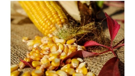 Alimento de origem indígena