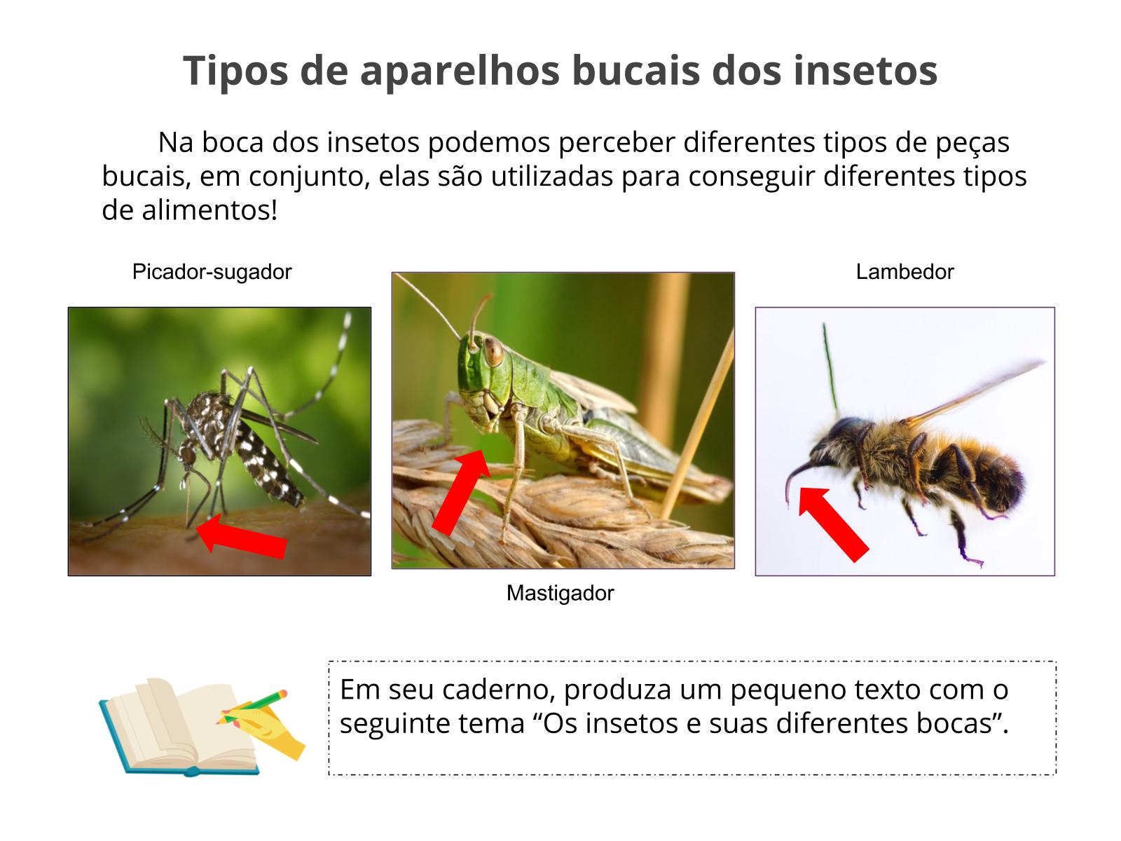 Os insetos e seus diferentes aparelhos bucais