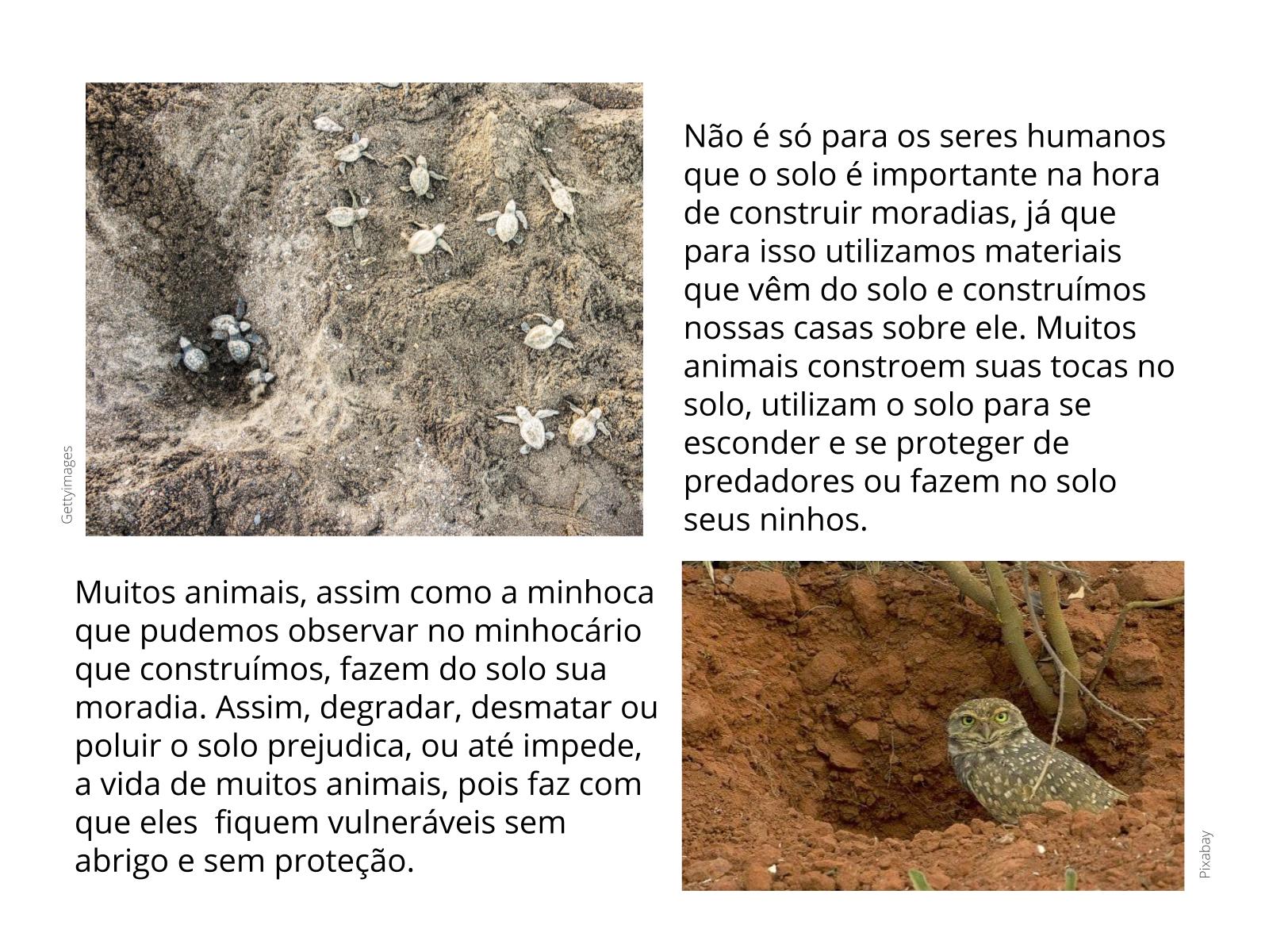 O solo é a casa de animais