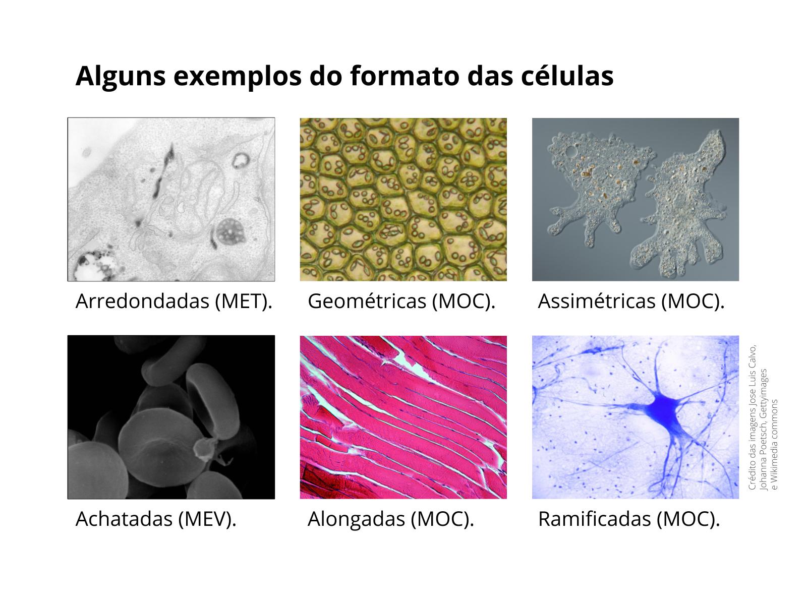 Observando os tipos de células