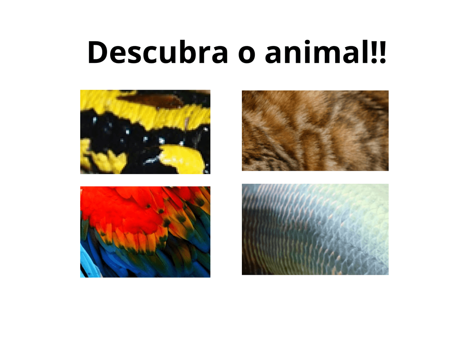 Como é coberto o corpo dos animais?