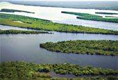 A Amazônia não é só nossa. Foto: Carol da Riva