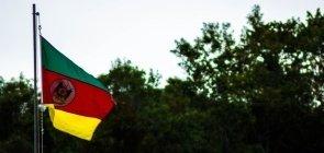 Bandeira do estado do Rio Grande do Sul hasteada diante de uma floresta