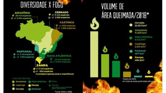 Queimadas no Cerrado e na Amazônia