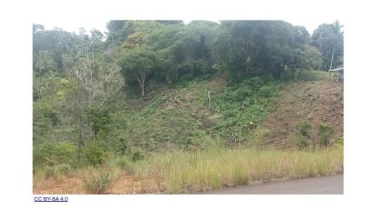 Recuperação da vegetação em áreas degradadas