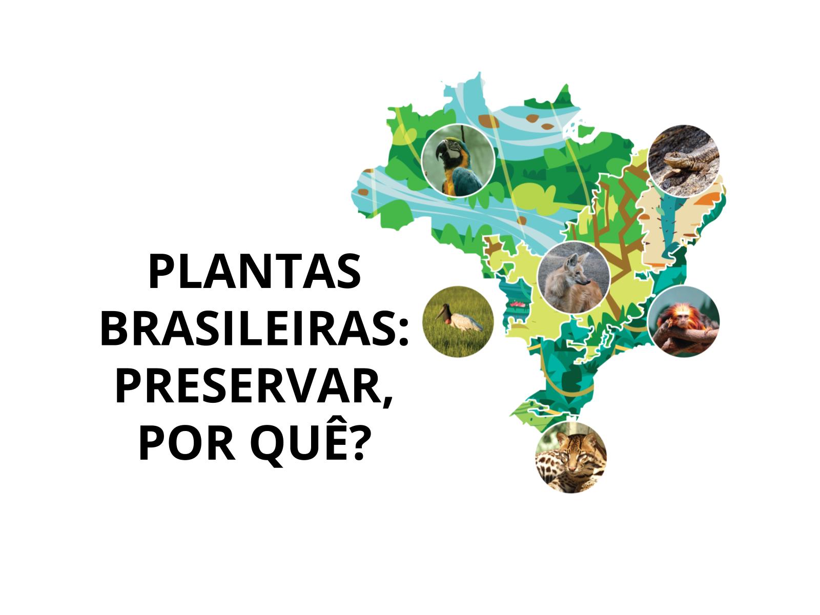 PLANTAS BRASILEIRAS: PRESERVAR, POR QUÊ?