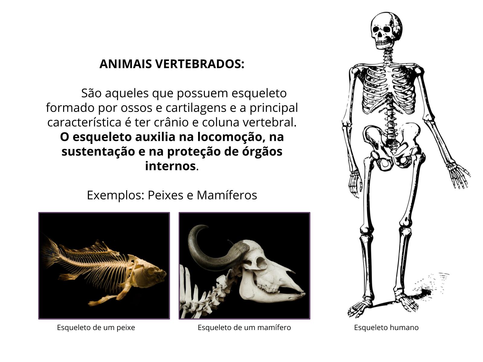 Para o que serve o esqueleto?