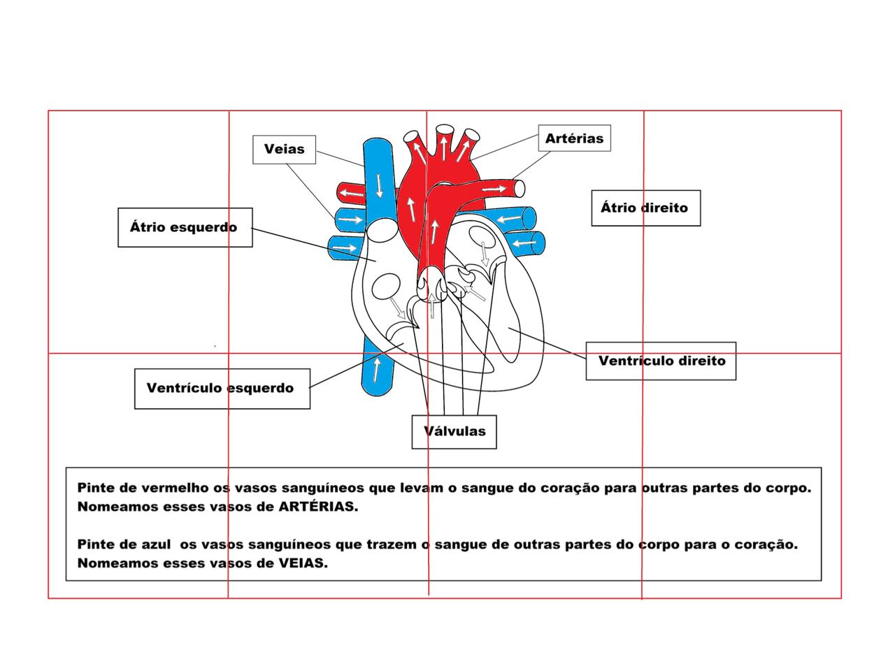 Plano de Aula - 5º ano - Ciências - O coração