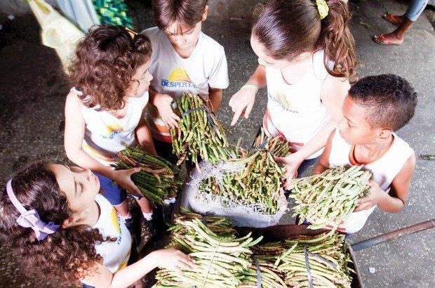 Vagens são reunidas em amarradinhos. Em cada um há mais ou menos o mesmo peso. Fernando Vivas