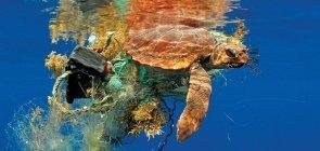 Tartaruga marinha proxima à superfície com lixo preso
