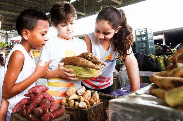 Em caixas, o aipim e outras raízes são colocados na mesma quantidade e disposição. Fernando Vivas