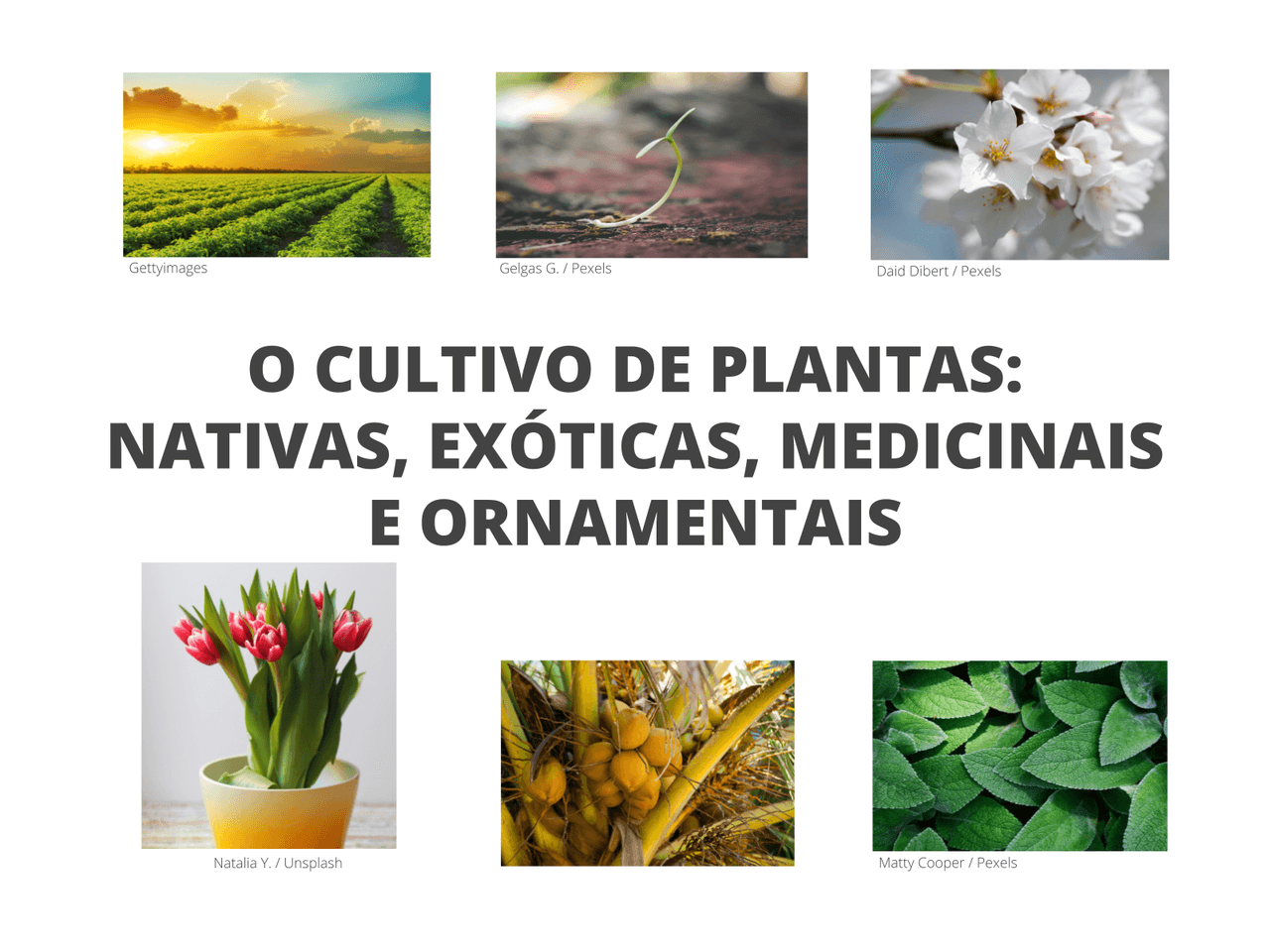 O CULTIVO DE PLANTAS: NATIVAS, EXÓTICAS, MEDICINAIS E ORNAMENTAIS