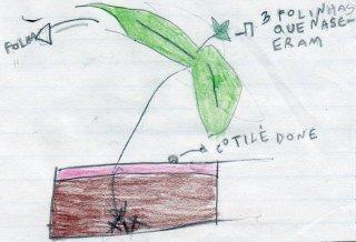 Explore ao máximo o estudo das plantas e oriente o desenho científico