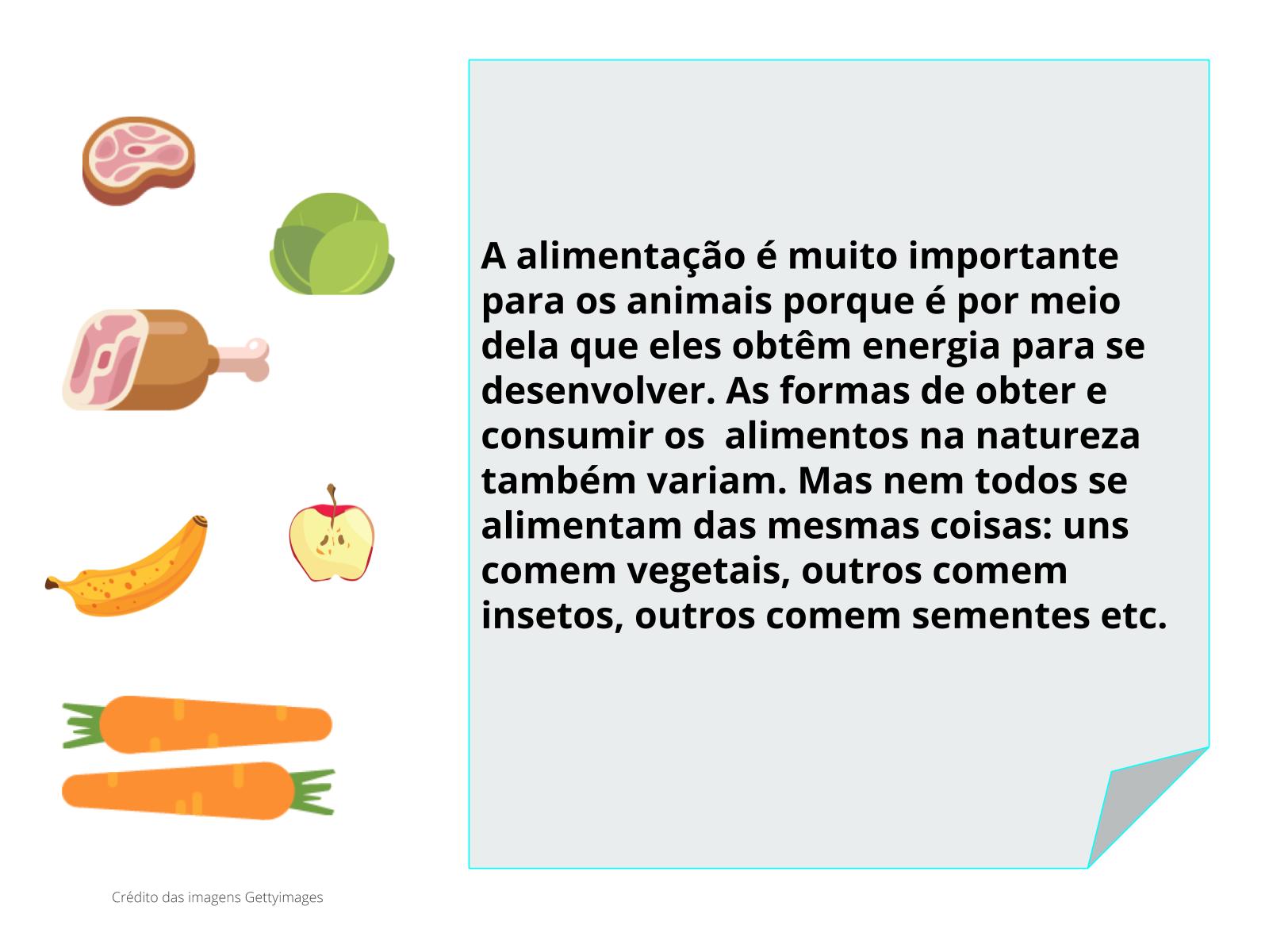 É hora de comer: como se alimentam os animais?