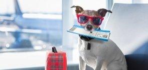 Cachorro com óculos escuros e mala levando uma passagem na boca