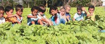TERRA À VISTA! Na Creche Doraci Dália Granito, cada criança cuidou de uma alface. Nenhuma planta morreu. Foto: Gilvan Barreto