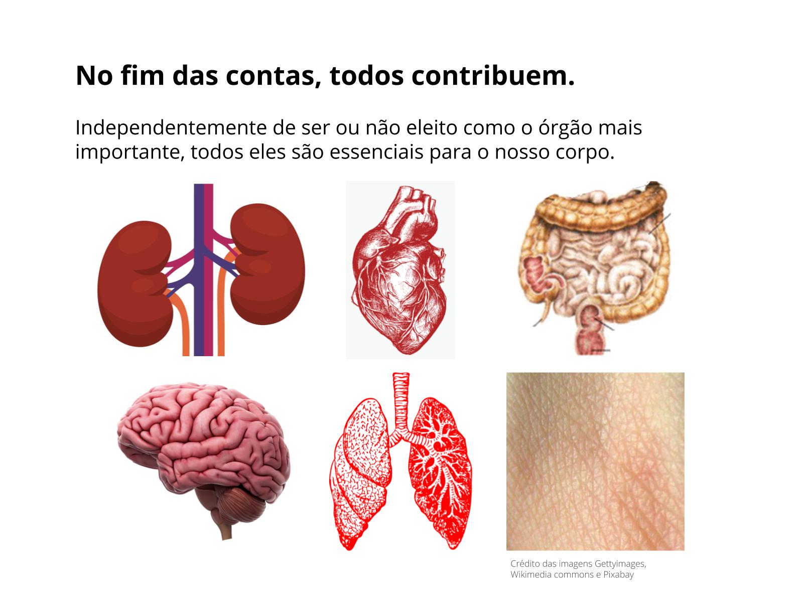 Os principais órgãos e suas funções