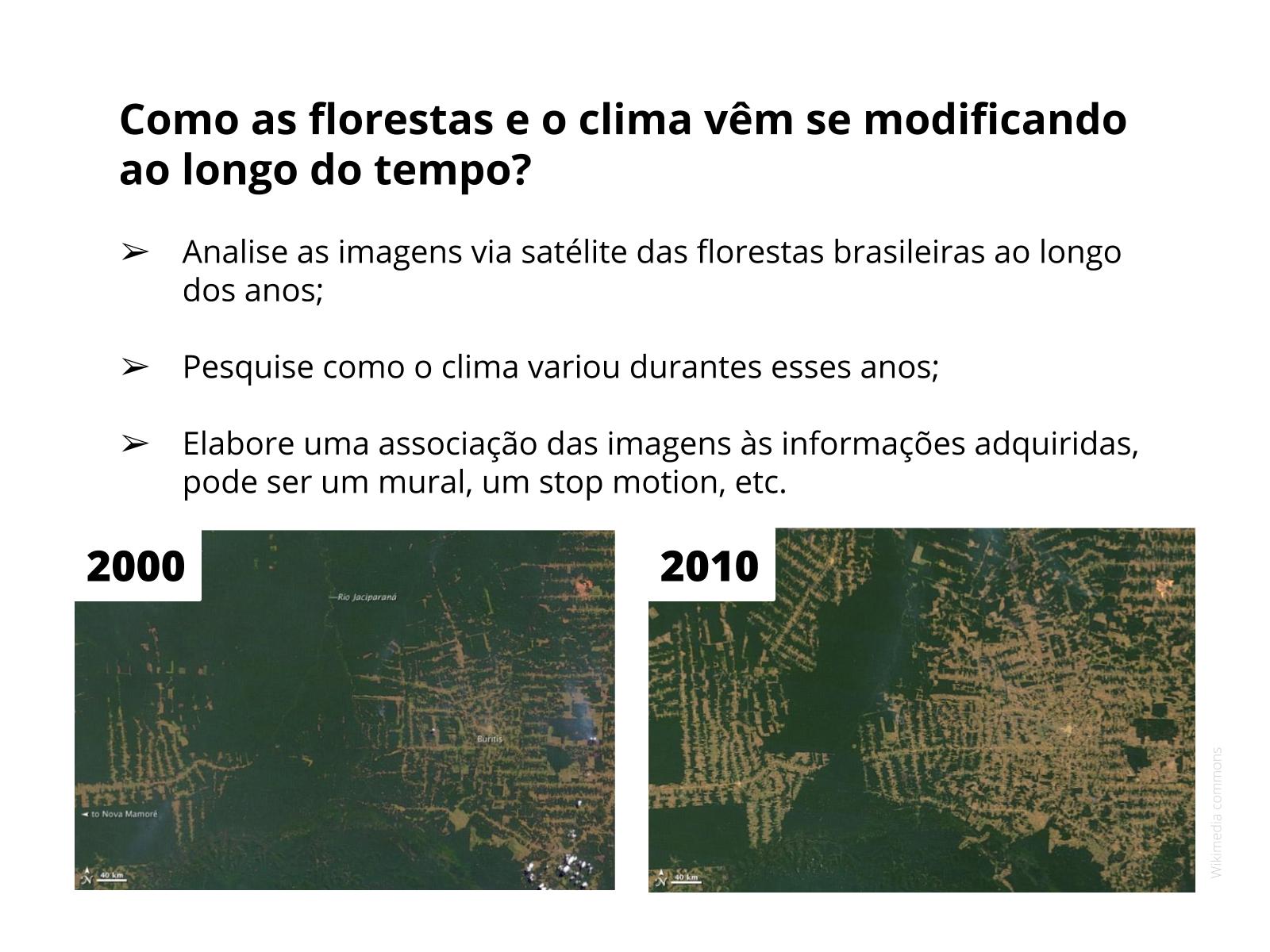 A influência das florestas no clima brasileiro