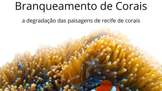 Branqueamento de Corais: a degradação das paisagens de recife de corais