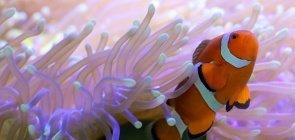 6 questões de prova de Ciências para entender os seres vivos