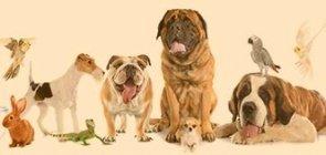 distinguir animais de hábitos noturnos dos de hábitos diurnos e dar