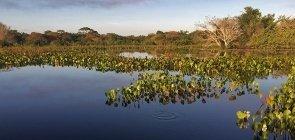 E-book:  Biomas brasileiros na BNCC