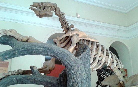 5 animais gigantes que habitaram o Brasil há milhares de anos