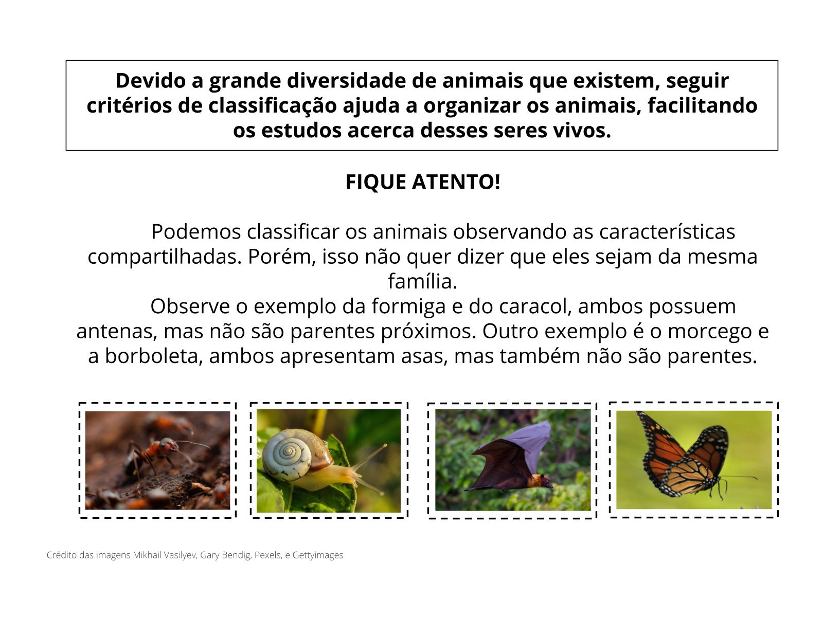 Os animais e suas características