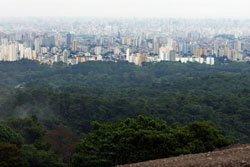 Parque Estadual da Cantareira. Foto: Rafael Cusato