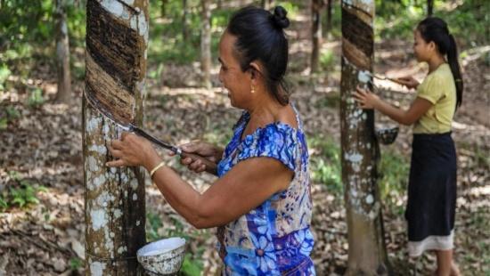 Atividades extrativistas no Brasil