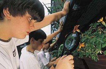 Alunos do Ofélia Fonseca procuram a larva do mosquito transmissor em vasos de plantas. Foto: Luciana Cavalcanti