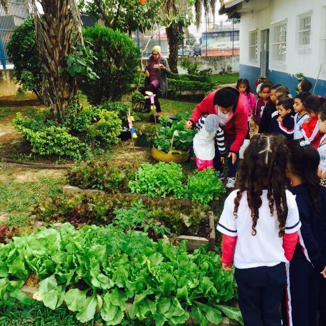 Muitas vezes Conheci a horta de um lindo projeto em uma escola vizinha FL89