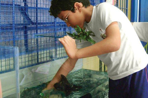 A turma montou e arrumou o aquário, o que rendeu muitas pesquisas e debates. Arquivo pessoal/Roberto Leandro dos Santos