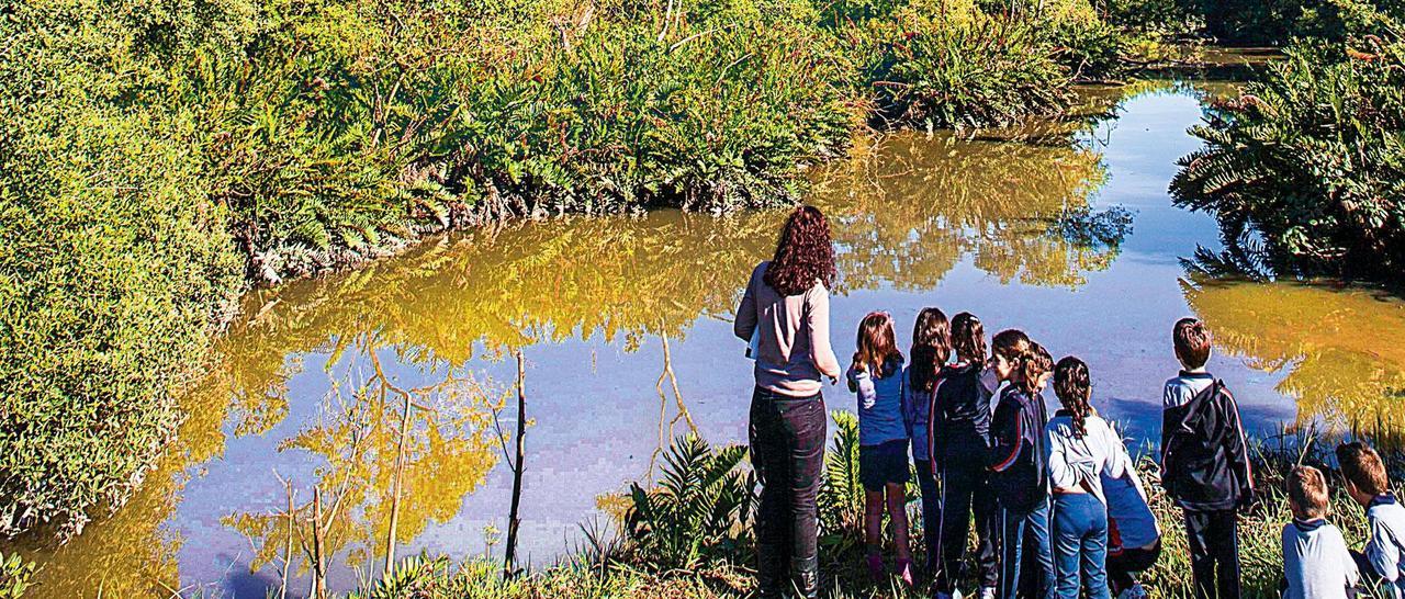 Os investigadores do manguezal