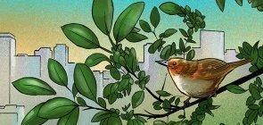 Um convite a olhar os pássaros pela janela de casa