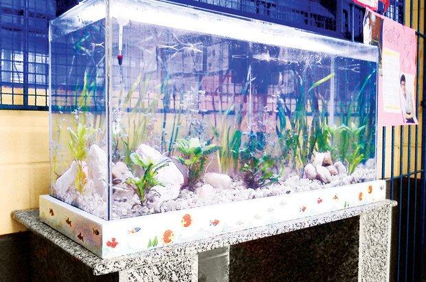 O tanque revitalizado ganhou luz, água em condições adequadas, plantas e vários peixes. Arquivo pessoal/Roberto Leandro dos Santos