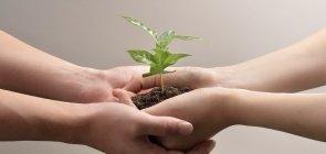 Duas mãos em concha com puhado de terra e muda de planta no meio