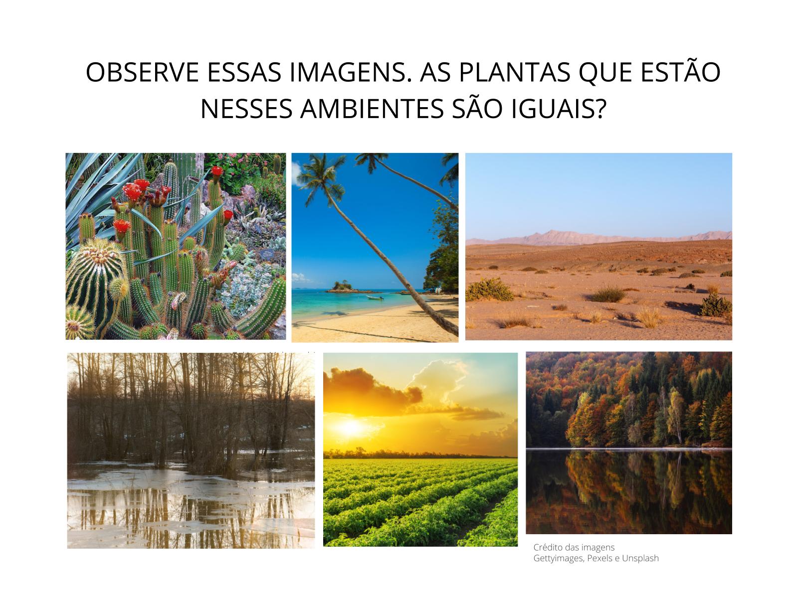 As Plantas e o Ambiente